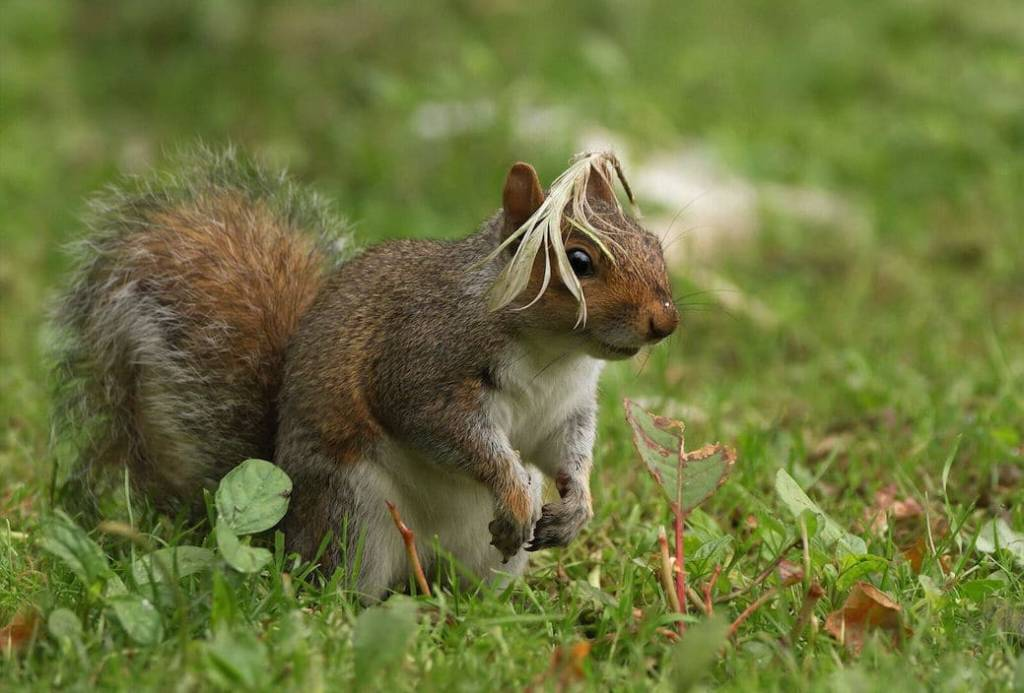 Squirrel funny