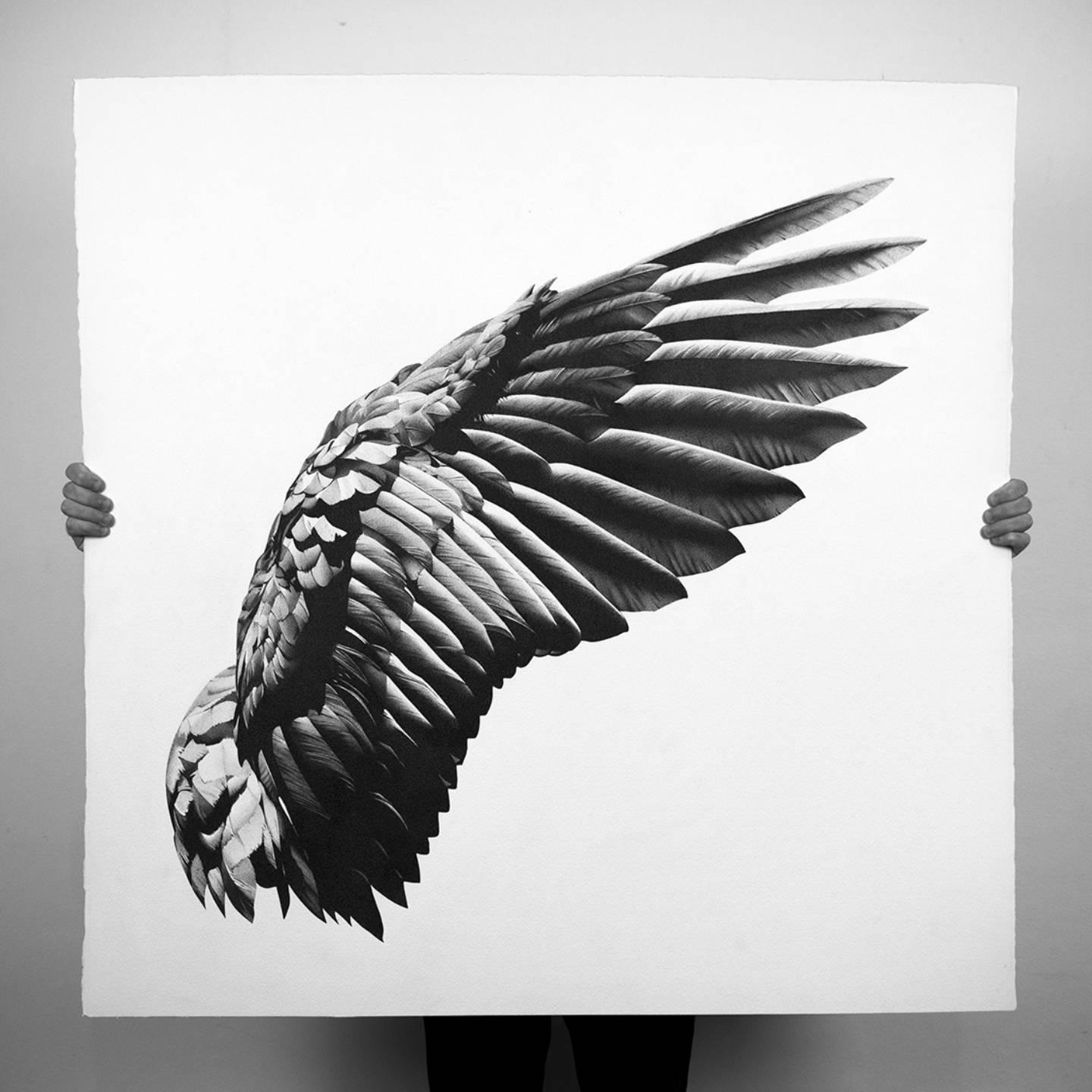 Realistic Black wing drawing by Alessandro Paglia