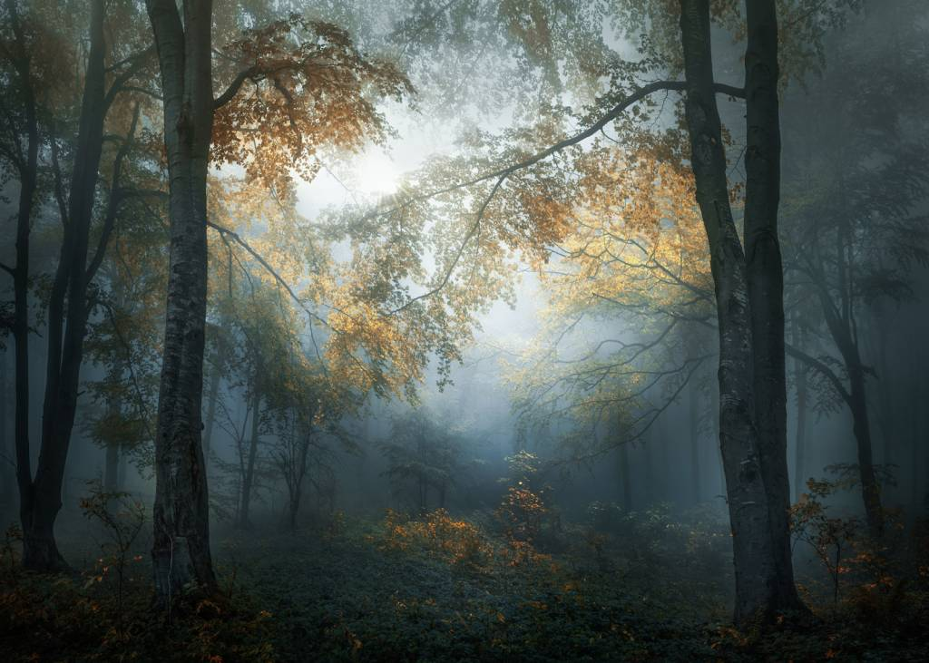 Early Autumn - Veselin Atanasov, Bulgaria