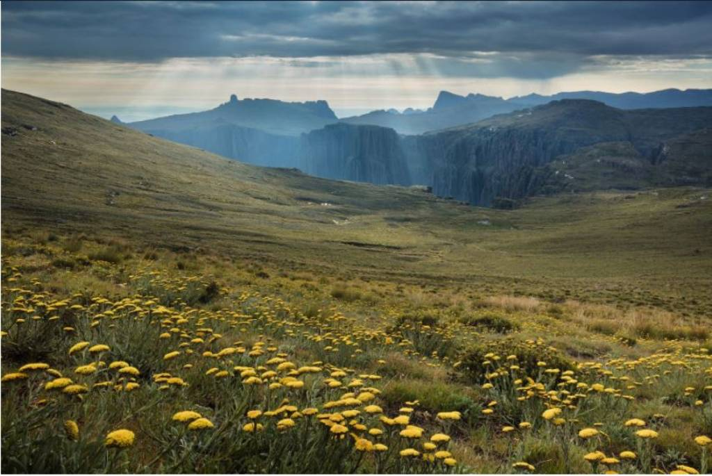 alex nail landscape south africa