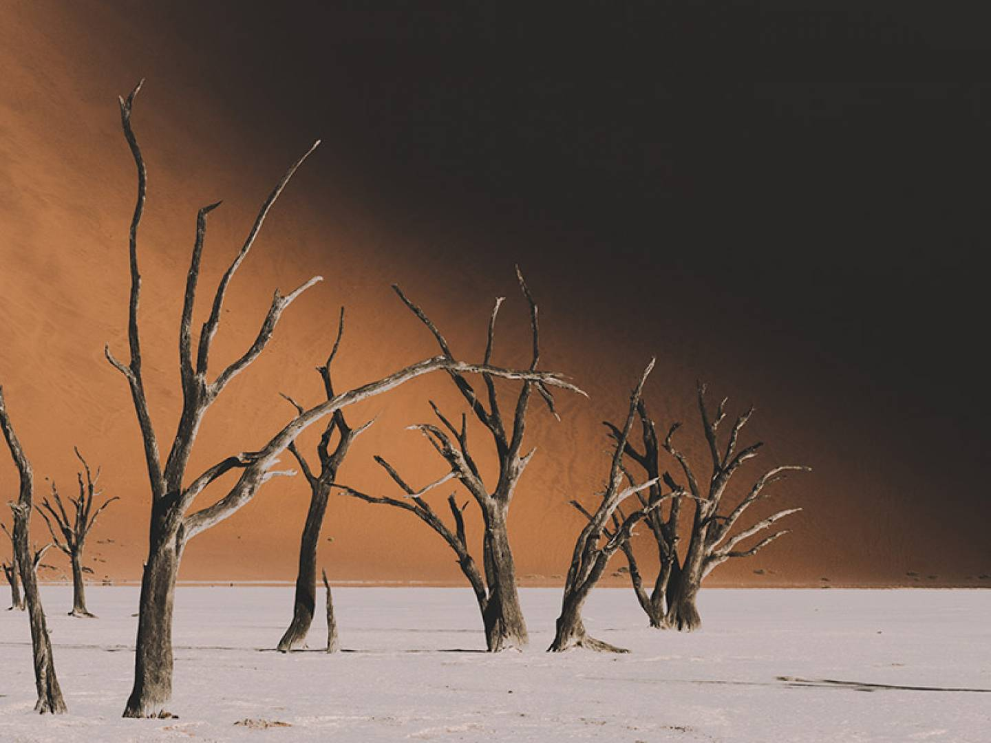 A dry, lonely tree in the middle of the Namib Desert, Namibia